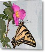 Western Tiger Swallowtail Metal Print