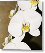 3 White Orchids Metal Print
