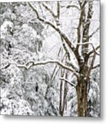 Winter In Monongahela National Forest Metal Print