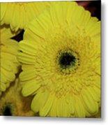 Yellow Gerbers Metal Print