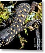 Yellow Spotted Tropical Night Lizard Metal Print