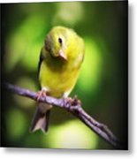 3008 - Goldfinch Metal Print