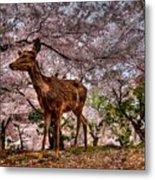 Nara Japan Metal Print