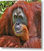 31- Orangutan Metal Print