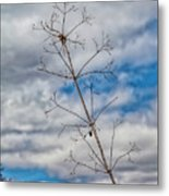 Trees Sky And Clouds Metal Print
