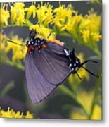 3398 - Butterfly Metal Print
