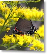 3454 - Butterfly Metal Print