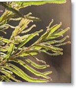 Australian Bush Metal Print
