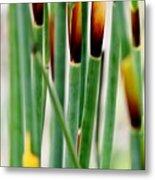 Bamboo Grass Metal Print
