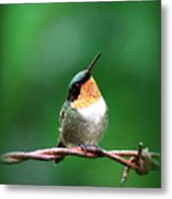 3531 - Ruby-throated Hummingbird Metal Print