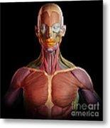Facial Muscles Metal Print
