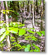 cypress forest and swamp of Congaree National Park in South Caro Metal Print