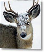 3x3 Mule Deer Buck-signed-#8800 Metal Print