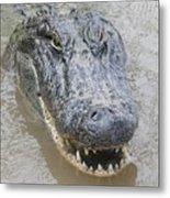 Alligator Metal Print