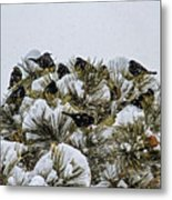 4 And 20 Blackbirds Metal Print