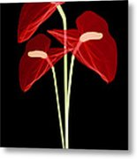 Anthurium Flowers, X-ray Metal Print