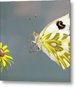 Becker's White Butterfly Metal Print