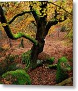 Beech Tree Metal Print