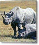 Black Rhinocerous Metal Print