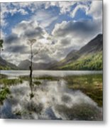 Buttermere Tree Metal Print