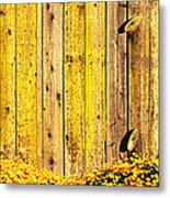 California Golden Poppies Eschscholzia Metal Print