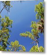 4- Cypress Trees Metal Print
