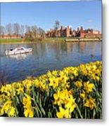 Daffodils Beside The Thames At Hampton Court London Uk Metal Print