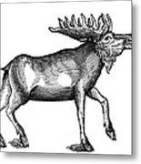 Elk/moose Metal Print