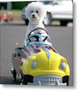 Fifi Goes For A Ride Metal Print by Michael Ledray