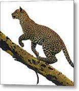 Leopard Panthera Pardus Climbing Metal Print