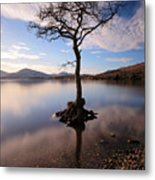 Loch Lomond Tree Metal Print