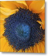Macro Shot Of Flower Metal Print