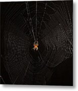 Marbled Orb Weaver Spider Metal Print