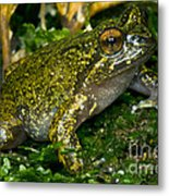 Mehu�n Green Frog Metal Print