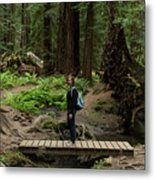 Montgomery Woods State Natural Reserve Metal Print