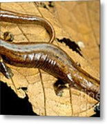 Nauta Palm Foot Salamander Metal Print
