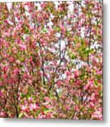 Pink Cherry Tree Metal Print