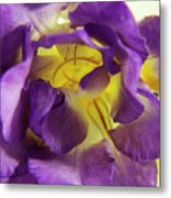 Purple Freesia Metal Print