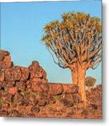 Quiver Tree Forest - Namibia Metal Print