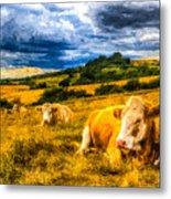 Resting Cows Art Metal Print