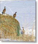 4 Roosters And A Hen Metal Print