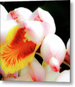 Shell Ginger Metal Print