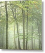 Stunning Colorful Vibrant Evocative Autumn Fall Foggy Forest Lan Metal Print