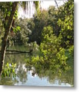 Swamp Reflection Metal Print