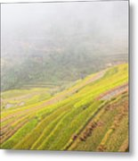 Terrace Fields Scenery In Autumn Metal Print