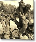 Twisted Driftwood Metal Print