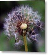 Weed Seeds Metal Print