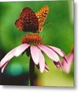 #416 14a Butterfly Fritillary, Coneflower Lunch Break Good Till The Last Drop Metal Print