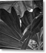 4327- Leaf Black And White Metal Print