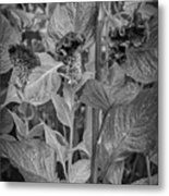 4398- Flower Black And White Metal Print